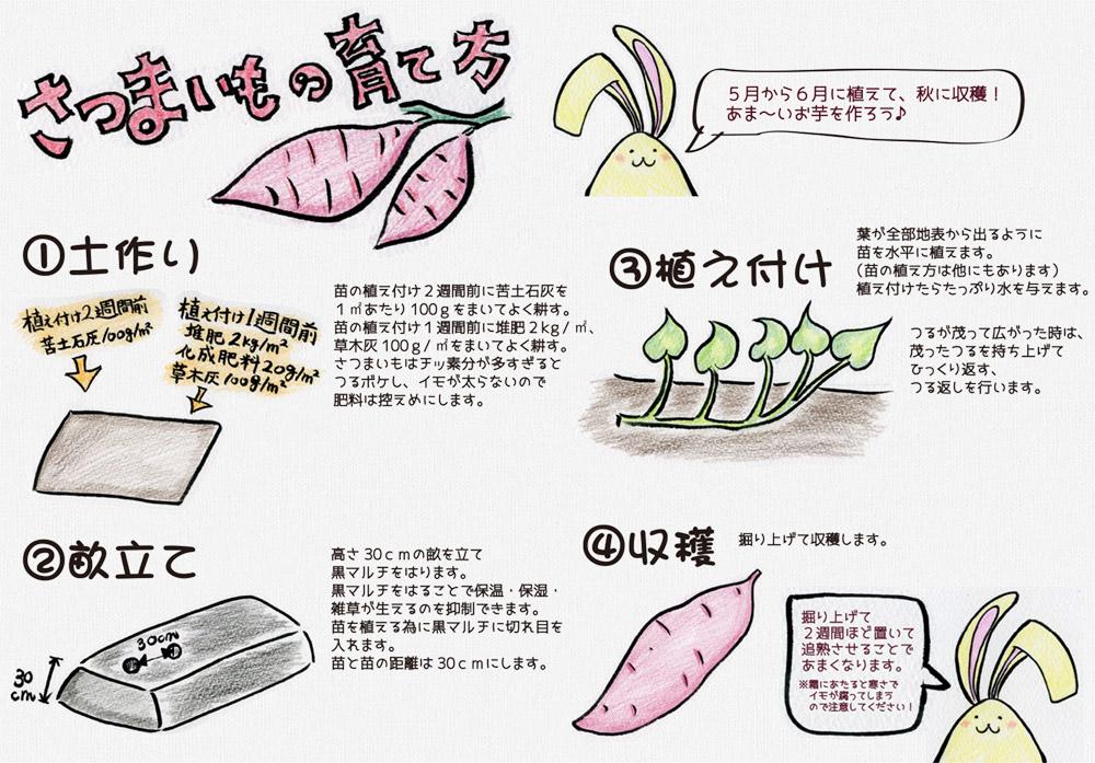 育て 方 の さつま芋 美味しいさつまいもの育て方